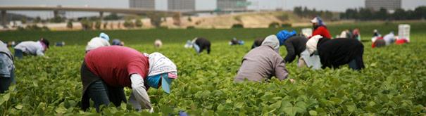 As mulheres na agricultura. Verifique o direito do trabalho, salário mínimo, salário e carreira na Meusalario